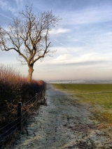 <h5>Frosty Morning by Gordon Woods</h5>