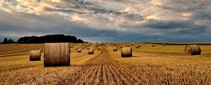 <h5>Moodyish Sky Over Cornfields by Maureen Ford</h5>
