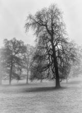 <h5>Fog by Lorraine Spittle</h5>