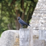 <h5>Jackdaw by Samantha Atkinson</h5>