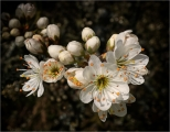 <h5>1st Experienced - Spring Blossom by Mike Pockney</h5>