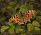 <h5>Experienced - Comma in the Spring by Mike Pockney</h5>