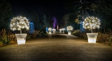 <h5>Experienced - Christmas Broadwalk at Kew by Paul Grant LDPS</h5>