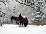 <h5>Aspiring - Horses In The Snow by Margaret Grant</h5>