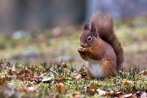 I love nuts by badams