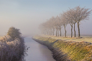 Tree Line, Romney Marsh