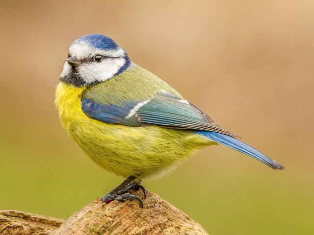1st Aspiring - Big Bluey by alan Douglas