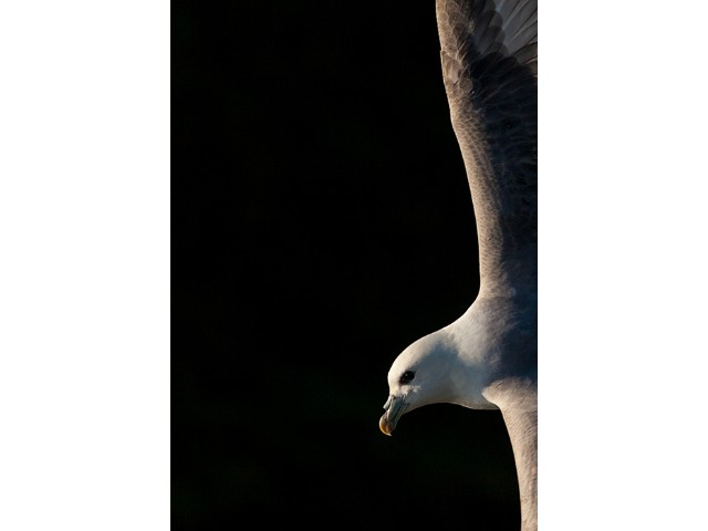 2nd Experienced - Fulmar Might by Sandy Robertson