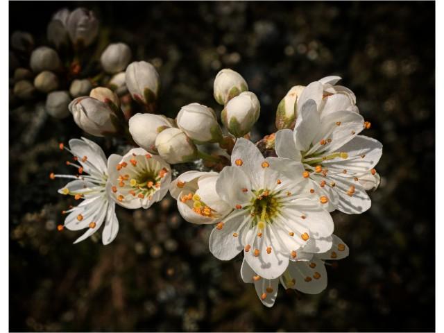 1st Experienced - Spring Blossom by Mike Pockney