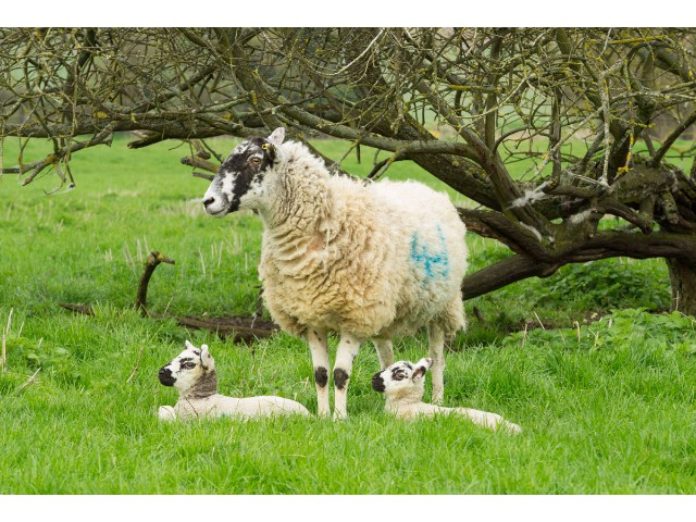 Highly Commended Aspiring - Proud Mum by Davina Williams