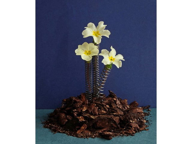 Highly Commended Aspiring - Spring Flowers by Sylvia Morrow